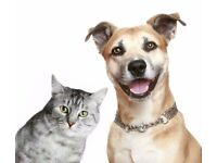 Pet sitter & dog walker.