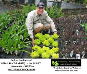 Need GROUND COVER, BORDERS, MASS PLANTING?  LOOK HERE! Mudgeeraba Gold Coast South Preview