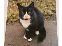 CAT FOUND. Lovely, shy but friendly male, neutered black and white cat. Loves a cuddle.