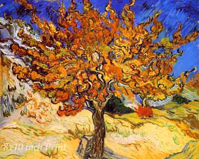 Mulberry Tree by Vincent Van Gogh - Landscape  Garden  8x10 Print Picture 1624