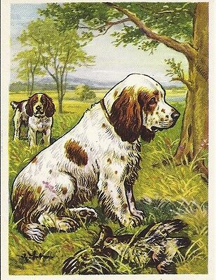 1952 Rare Dog Art Print Austria Tobacco Company Trade Card CLUMBER SPANIEL