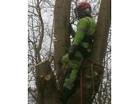 Tree work wanted Birmingham