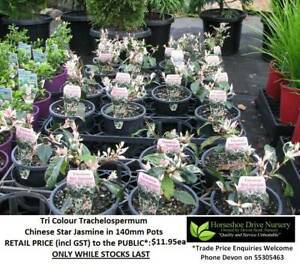 See our FLOWERING PLANTS - Prices from $9.95 Assorted Sizes HS096 Mudgeeraba Gold Coast South Preview