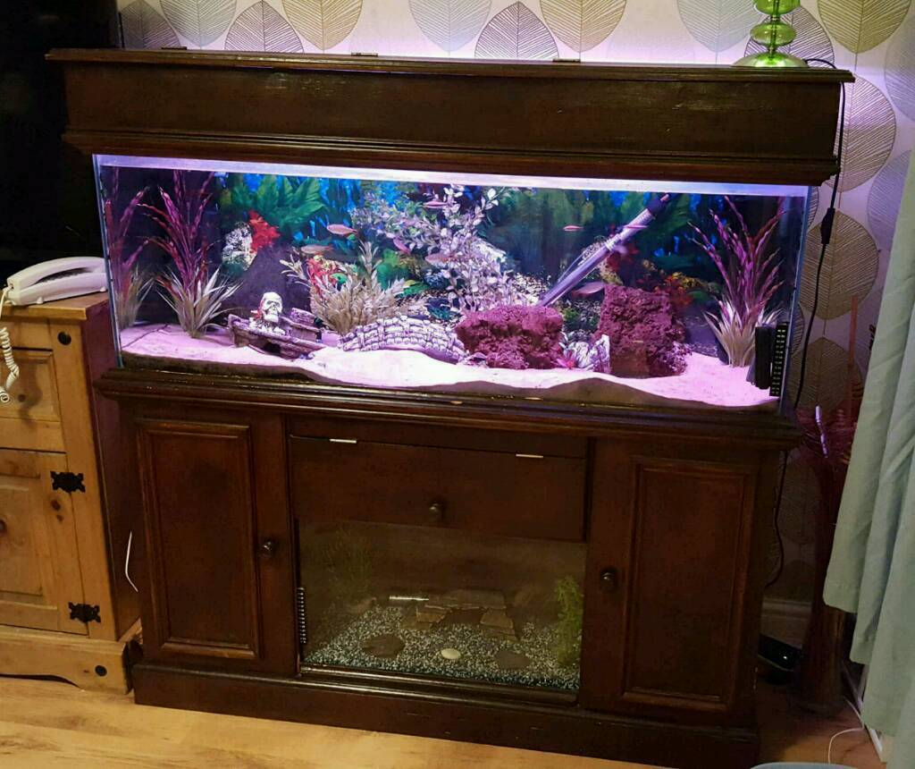 Aquarium fish tank northamptonshire - Fish Tank And Stand With Loads Of Accessories And Built In Fry Tank