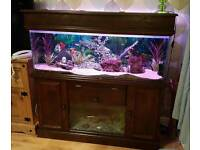 Fish tank and stand with loads of accessories and built in fry tank