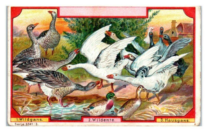 Wild Geese, Domestic Geese, Wild Ducks, Franck Kaffee Additive German Trade Card