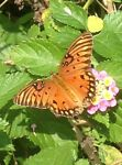 monarchfinds
