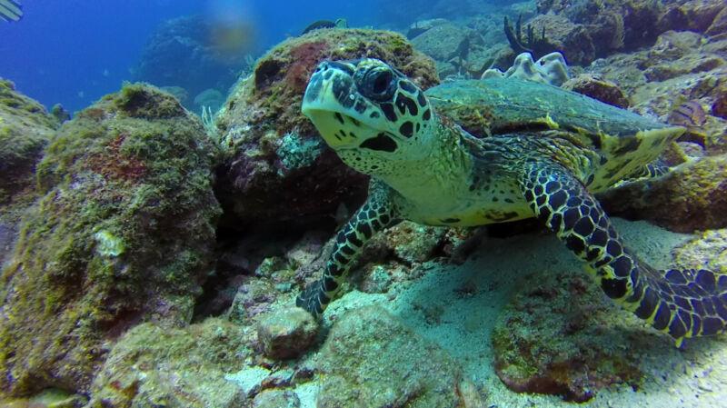 Eine Unterwasser-Aufnahme aus dem Coiba Nationalpark in Panama mit der GoPro 4 Entry-Level.