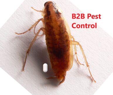 B2B pest control with $89* written service warranties