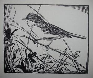 WHITETHROAT, Ornithology, 1930s Art Deco BIRD Birds Print : SIR PETER SCOTT