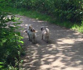 Experienced Inusured Pet Sitter/Walker