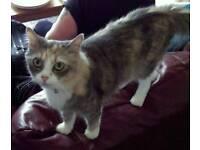 Rosie, tabby cat