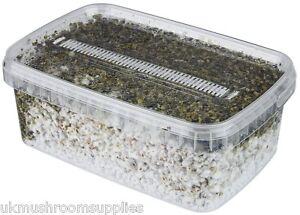 Magic farm's oyster PF tek mushroom grow pot only for kit (breathable filter)