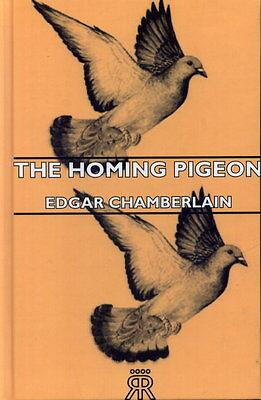 HOMING PIGEONS RACING BIRDS LOFTS EDGAR PIGEON MOULT WIDOWHOOD
