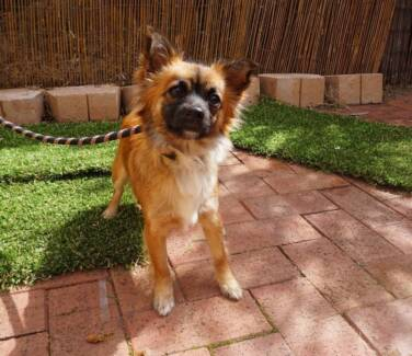 Adopt & Rescue – Come and meet our dogs OPEN SAT 5 SEP 9-1 Malaga Swan Area Preview