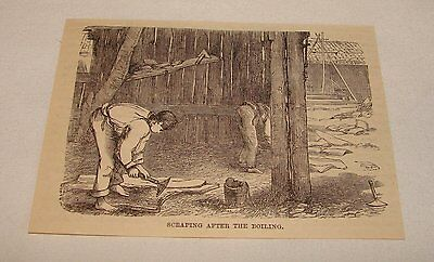 1885 magazine engraving ~ SCRAPING AFTER THE BOIL of Cork, Spain
