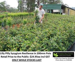 Need Plants? Busy Life? Order By Phone or Email!  We Can DELIVER! Tallai Gold Coast City Preview