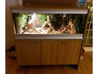 bearded dragons & vivarium for sale
