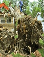 Best cheap price demolition excavation tree removal services