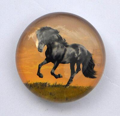 Magnet aus Glas ein schwarzes Pferd neu