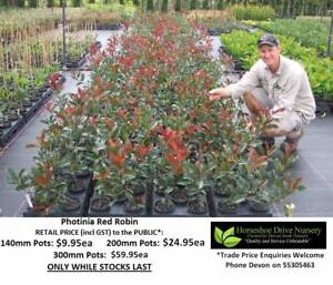 Superb Landscaping Plants - Priced From $9.95 Can Deliver Tallai Gold Coast City Preview
