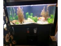 Large fishtank Juwel aquarium plus fish