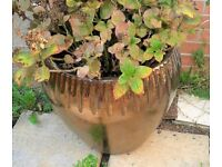 Large copper plant pot with hydrangea