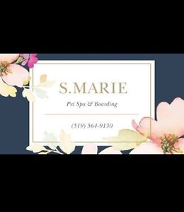 Pet Grooming - S Marie Pet Spa&Boarding