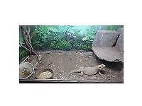 reptile vivs and tanks