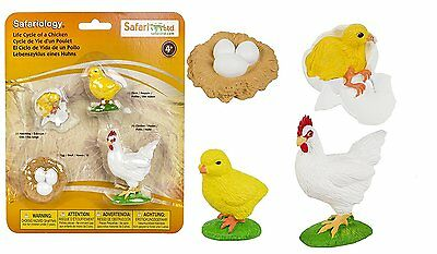 Life Cycle of a Chicken Ltd/ -