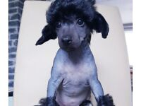 KC Registered Chinese Crested Puppies