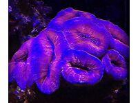 coral marine aquarium