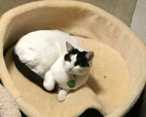 Lost male white and black cat Port Kennedy Rockingham Area Preview