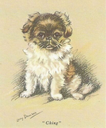 Pekingese Puppy - MATTED Dog Print - Lucy Dawson