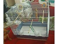 Cockatiel/budgie/canary cage