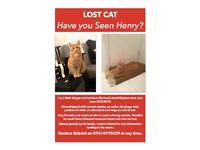 Missing Ginger Cat in Hackney