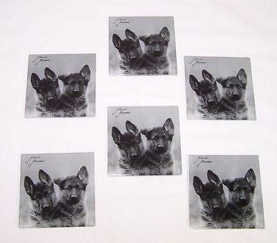 Untersetzer Glasuntersetzer Schäferhunde 6 Stück Hund Dog Neu OVP