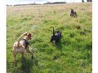 Dog walking, Boarding & Day care, Kenton, Newcastle. Fully licenced & insured.