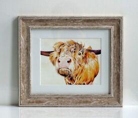 Highland cattle -giclee print - framed, new, studio clearance