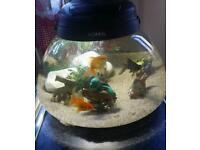 Nice aquael round fish tank