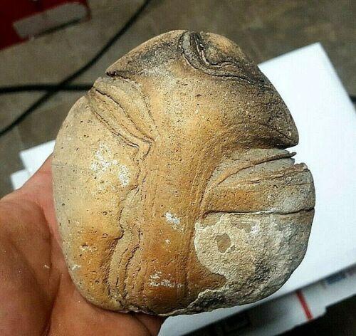 1 lbs 15 ounces Stromatolite Fossil Algae From Arizona Lapidary #222