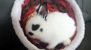 Rabbit for re homing