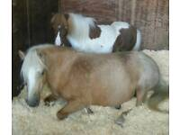 Two Special little ponys looking for a good home