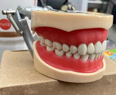 Usa Kilgore Nissin 200 Type Dental Typodont Teeth Model With Removable Teeth
