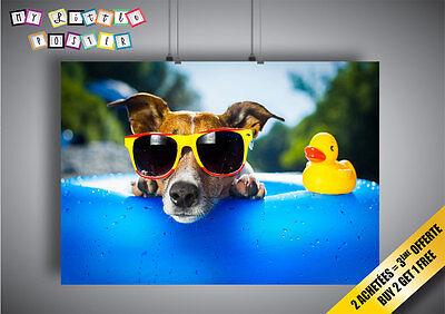 Poster Cane Cool occhiali da sole piscina Paperella di plastica