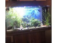 Juwel Fish tank with everything