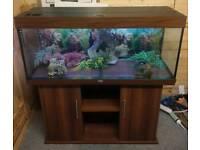 Juwel Rio 240L (4Ft) Fish TanK Setup