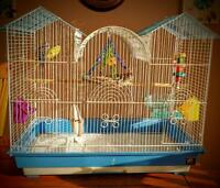 Beautiful pair of budgies, complete with setup and accessories!