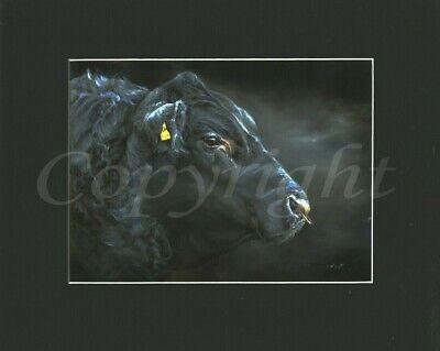 Aberdeen Angus bull print