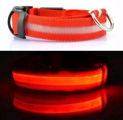 LED Dog Nylon Pet Collar Flashing Adjustable Safety Light Size S UK BNIB Be Seen